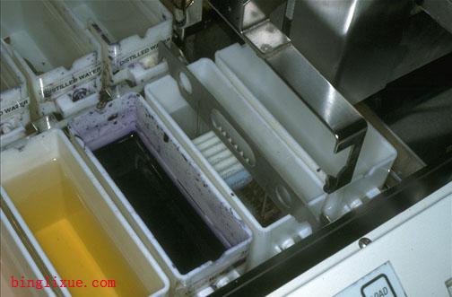 切片的普通染色-常规石蜡切片制作