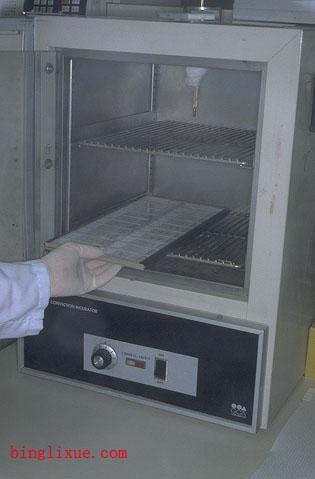 烘烤切片-常规石蜡切片制作